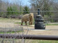 Free admission: Celebrate Father's Day at the Columbus Zoo