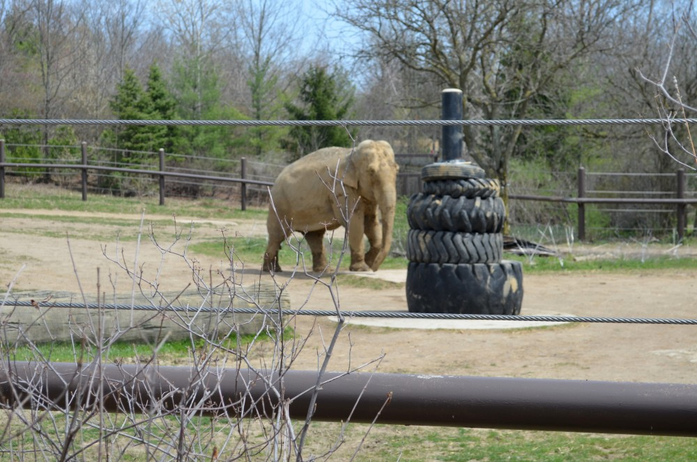 Zoofari At The Columbus Zoo For Adults Only