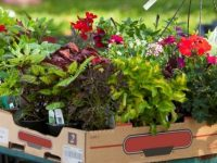 Inniswood Annual Spring Plant Sale