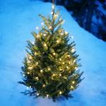 christmas tree outside 2