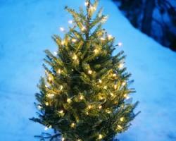 Worthington Holiday Open House and Tree Lighting