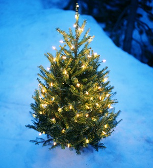 Holiday Tree Lighting, short north holiday, holiday open house