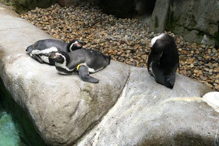 free admission Columbus Zoo