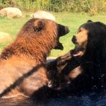 Zoofari at the Columbus Zoo is One Wild Night