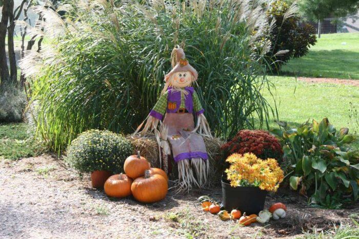 fall and halloween pumpkin scarecrow