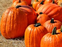 Over 100 events celebrating Fall and Halloween in Columbus