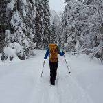Last chance to finish Metro Parks Annual Winter Hike Series