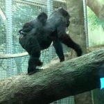 Free admission for Moms at the Columbus Zoo