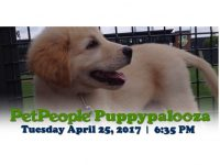 PetPeople Puppypalooza with the Columbus Clippers