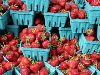 U-pick: Best places to pick berries in Columbus