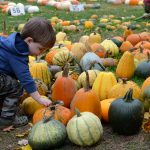 Columbus Pumpkin Patches, Farm Activities, Corn Mazes, and More!