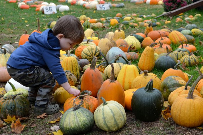 columbus pumpkin patches