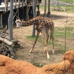 Columbus Zoo Tickets, Discounts, and Free Days