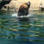 Columbus Zoo and Zoombezi Bay 2 day discount