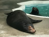 Sea lion habitat coming to the Columbus Zoo