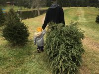 Christmas Tree Farms and Lots in Columbus