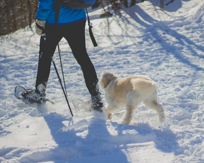 winter hike, dog hike
