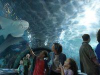 Free kid admission at Newport Aquarium with adult admission
