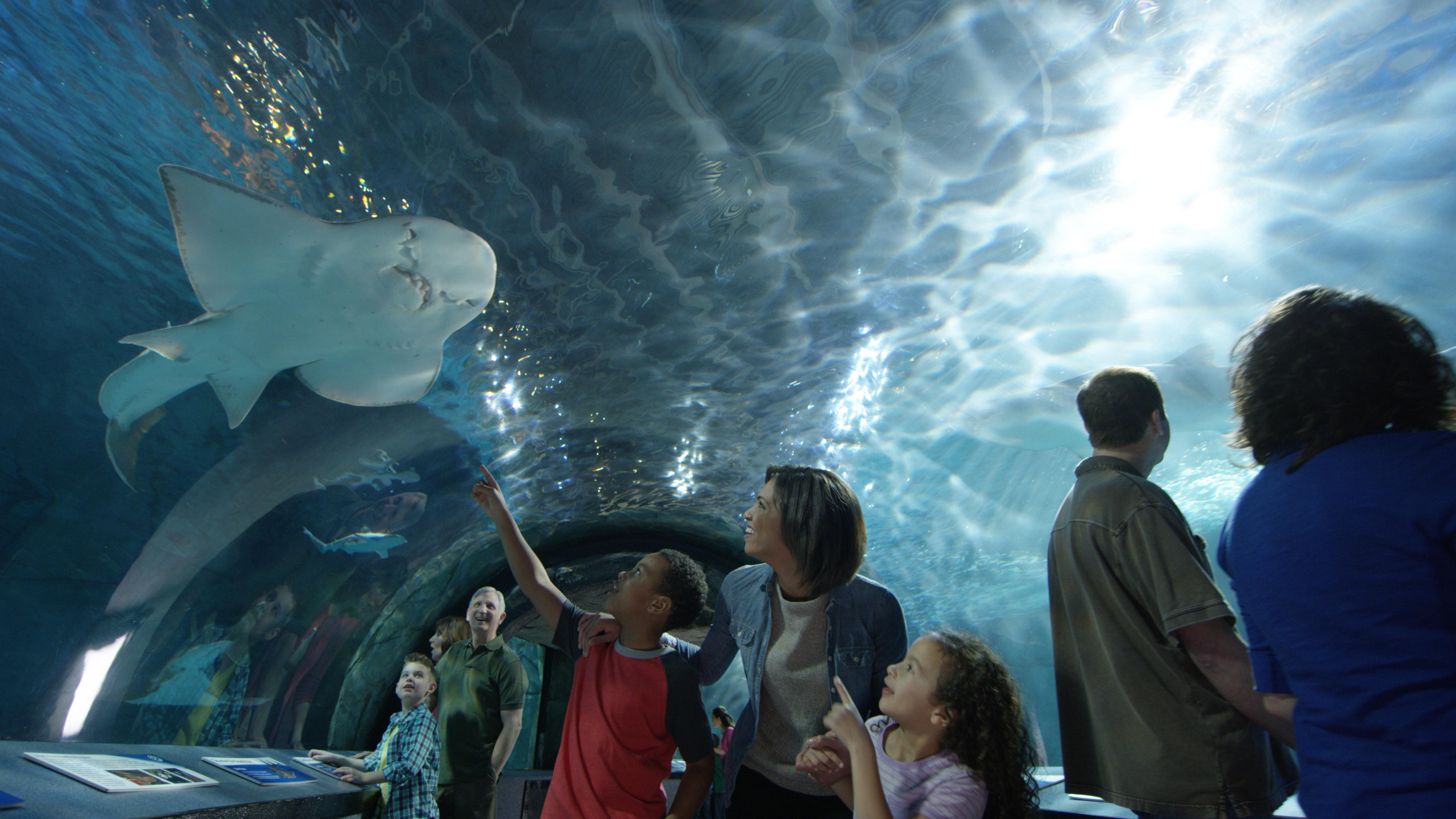 Cheap Gas Columbus Ohio >> Free kid admission at Newport Aquarium with adult admission