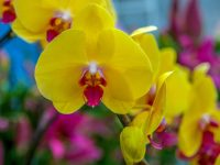 Orchids: Utopia at Franklin Park Conservatory