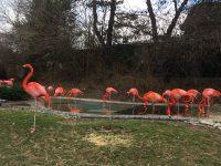 Columbus Zoo Seasonal Job Fair and Open Interviews