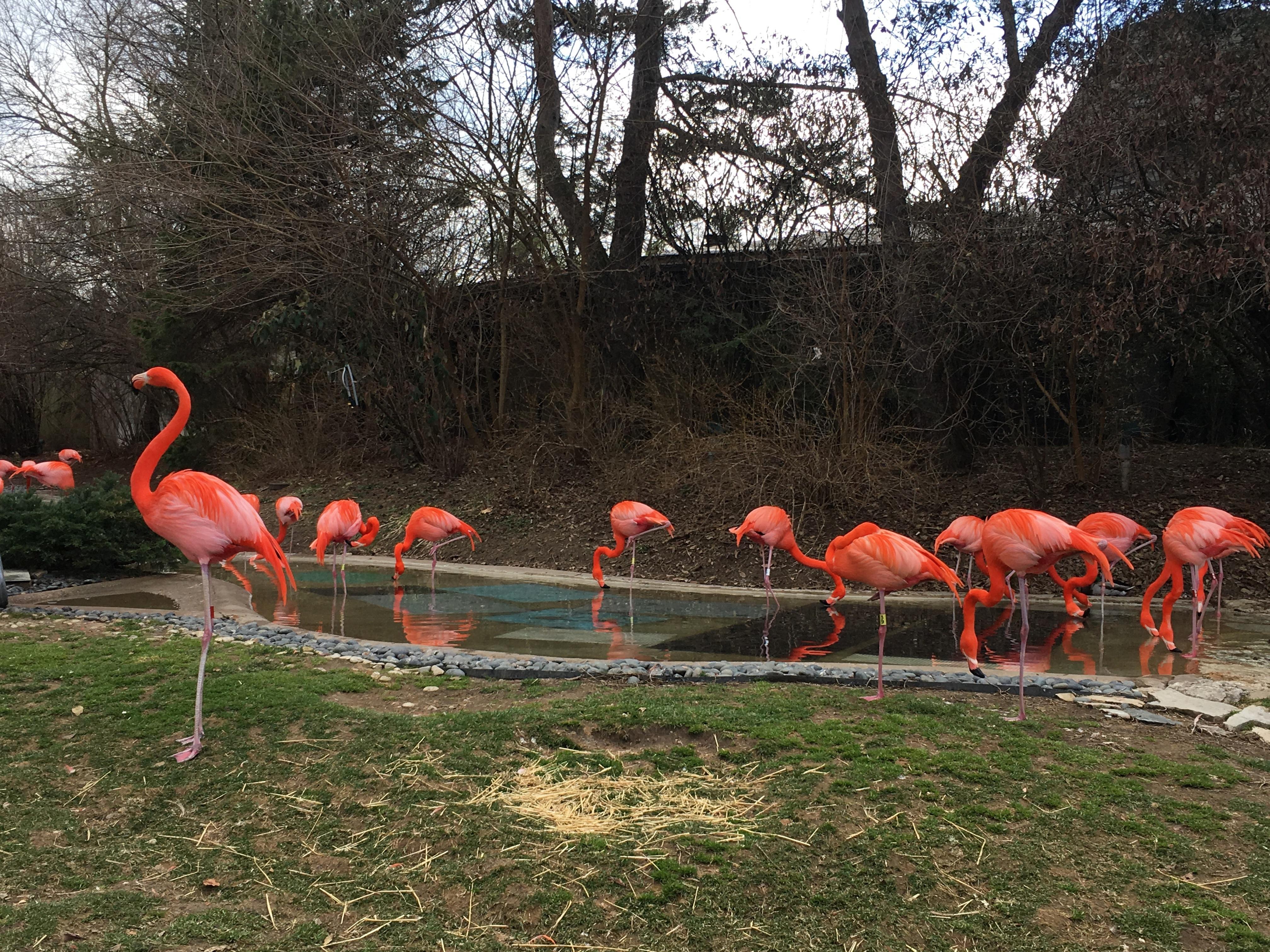 Cheap Gas Columbus Ohio >> Columbus Zoo Seasonal Job Fair and Open Interviews