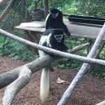 Free guests for Columbus Zoo Member Appreciation