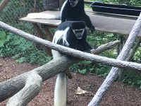 Free guests for Columbus Zoo Member Appreciation