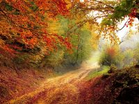 Best hikes and scenic drives for Fall Color in Ohio