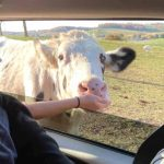 The Farm at Walnut Creek open for Drive-thru or Wagon Rides