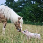 Visit rescued animals at Open Barn Days at Sunrise Sanctuary