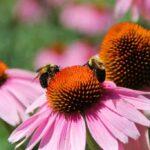 Free Pollinator Palooza at Franklin Park Conservatory